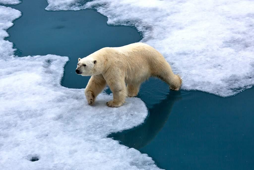 cusas y efectos del cambio climatico